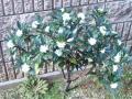 garden_chinchoge070304.jpg