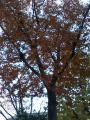 koyo_kakudai_06.11.26