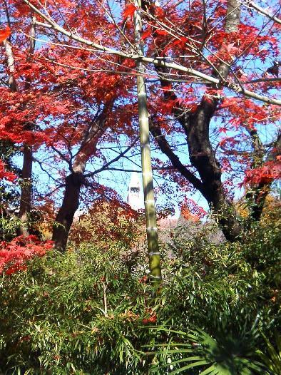 momiji_kinjo06.12.10-1.jpg