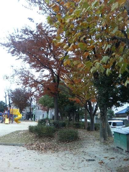 park_all06.11.26