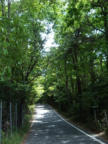 road_ohmorihiryu070519.jpg