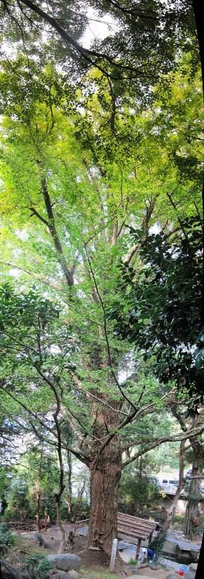 IMG_0774 パノラマ写真 - コピー (2)