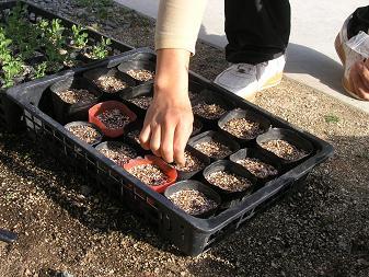 トマト種まき3月21日