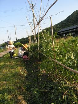 山のトマト垣