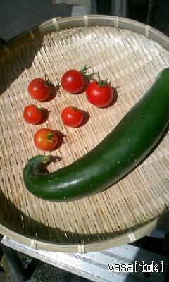 090905今日の収穫