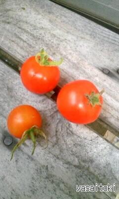 090911今日の収穫