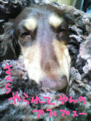 20101108_005.jpg