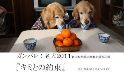 2011bana-11.jpg