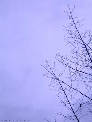 20061112180808.jpg