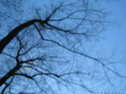 20061119092042.jpg