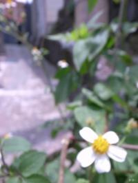 pic 327