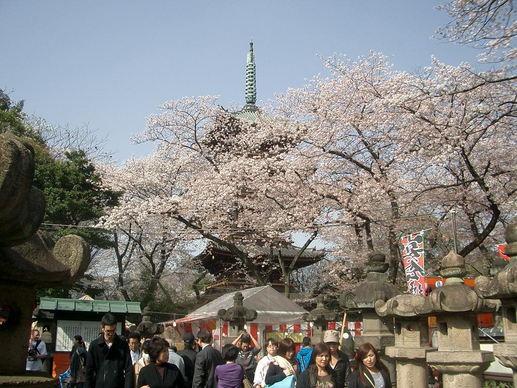 寛永寺・五重の塔