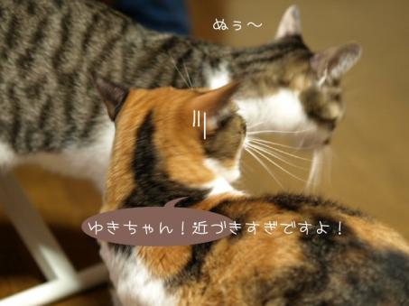 やっぱり やんちゃです(^▽^;)