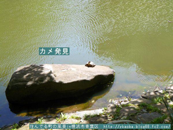 200904akamimikame1.jpg