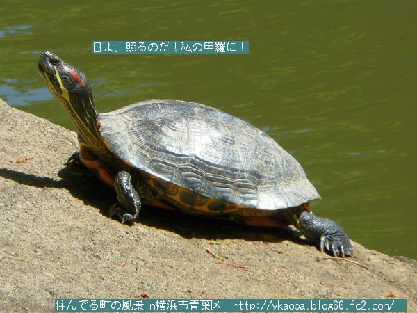 200904akamimikame2.jpg