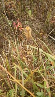 20101115食虫植物?2