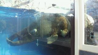 20110204鳥羽水族館せいうち