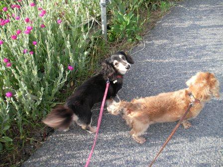 散歩 大好き!!