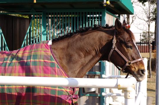 有馬5502