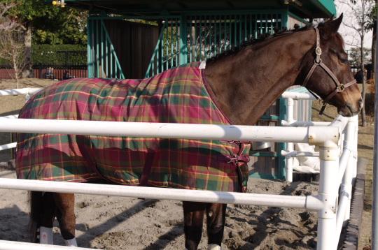 有馬5501