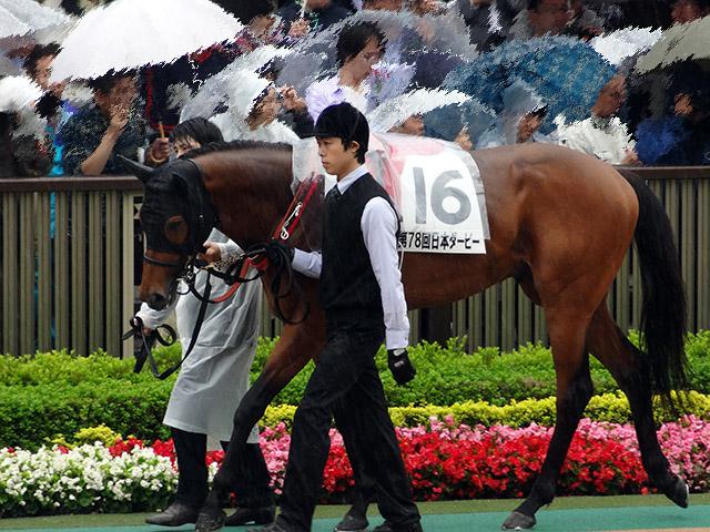 第78回 東京優駿観戦11