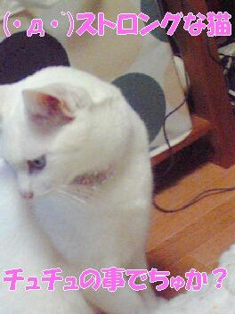 ストロング猫