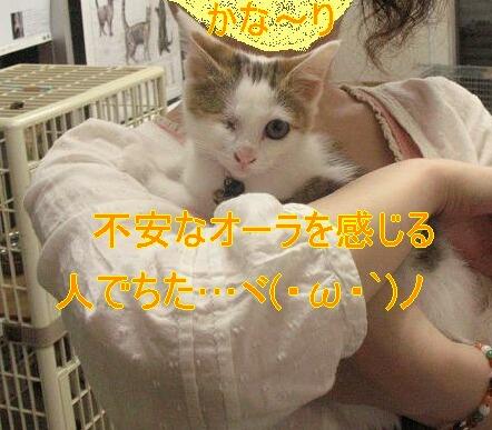猫が猫被ってたよぉ?(´д`)