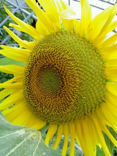 PICT4553_convert_20090630094638.jpg