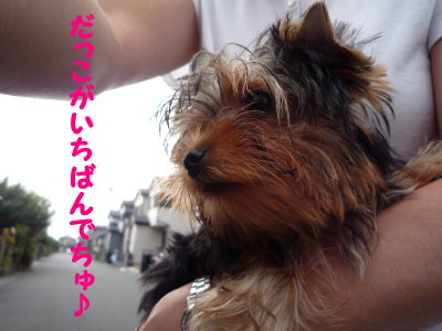 ぱぁるお散歩デビュー