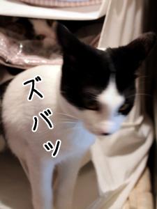 IMG_4360.jpg
