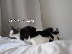 IMG_4880.jpg