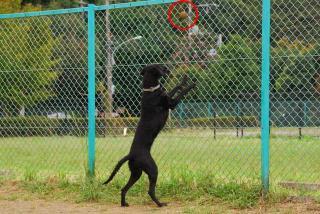 ボール遊びがしたいでち(1)