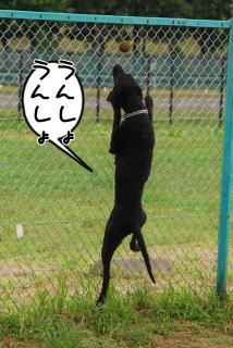 ボール遊びがしたいでち(2)