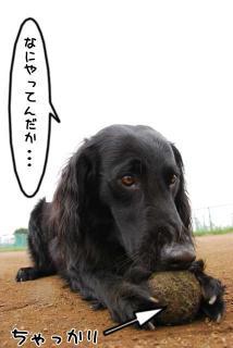 ボール遊びがしたいでち(4)
