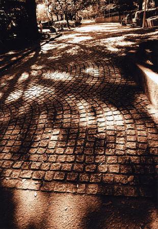 セピアの木洩れ日