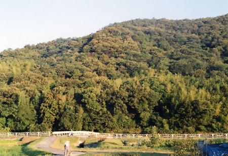 田舎の山2