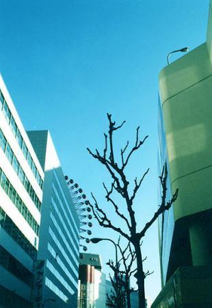 枯れ木の寂しさ
