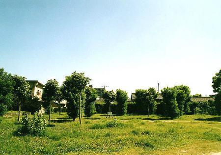 公園の緑達