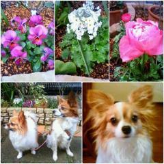 0218flowers2.jpg