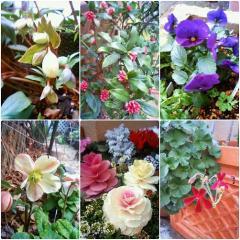 0218flowers.jpg