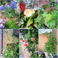 100414flowers01.jpg