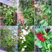 100414flowers02.jpg