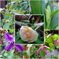 20100929flowers.jpg