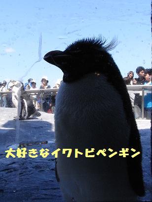 08.08.21旭山動物園 024