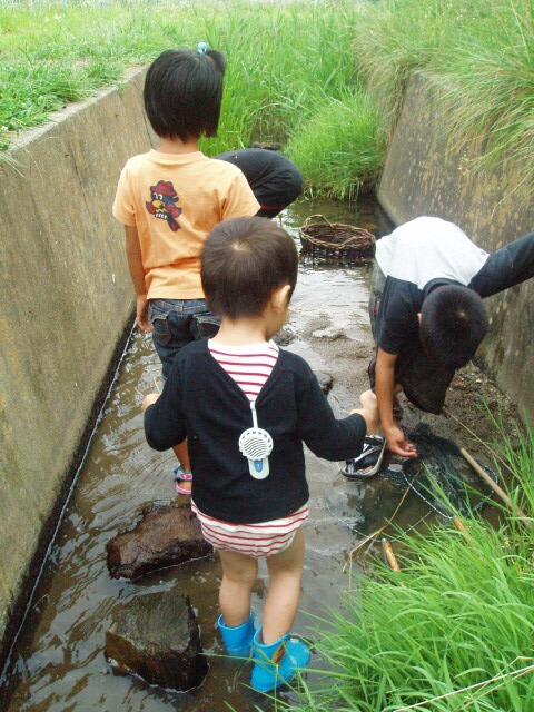 ザリガニ捕りH200823
