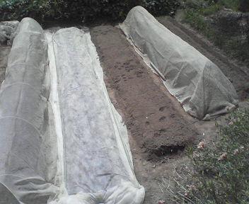 秋野菜植え付けH200907