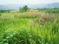 耕作放棄地H200919