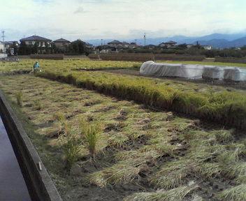 実りの秋稲刈H200927