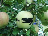 りんごに貼ったシールH201002