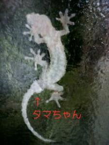 PA0_0846.jpg